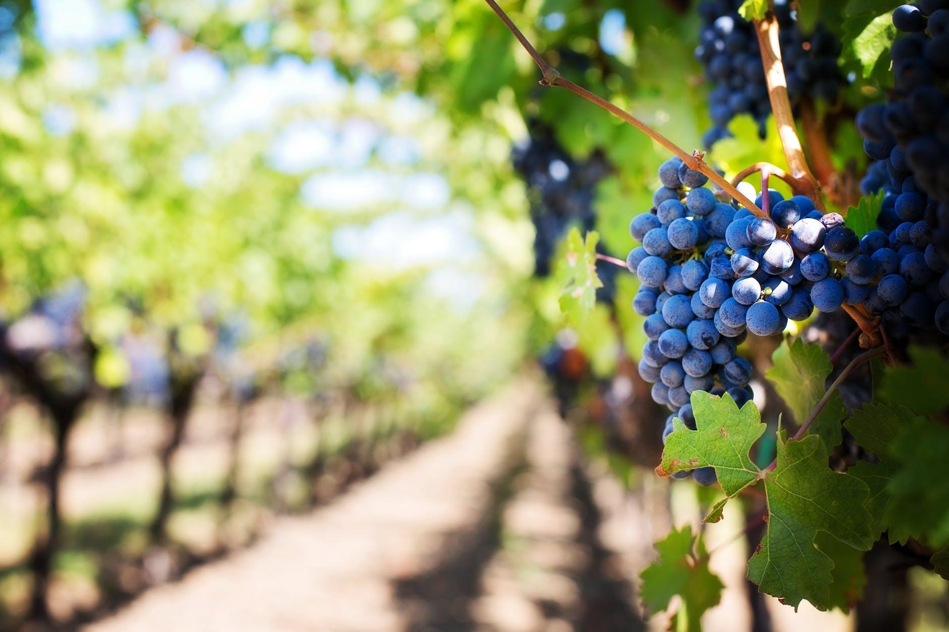 Har du nogensinde smagt en verdensklasse vin?