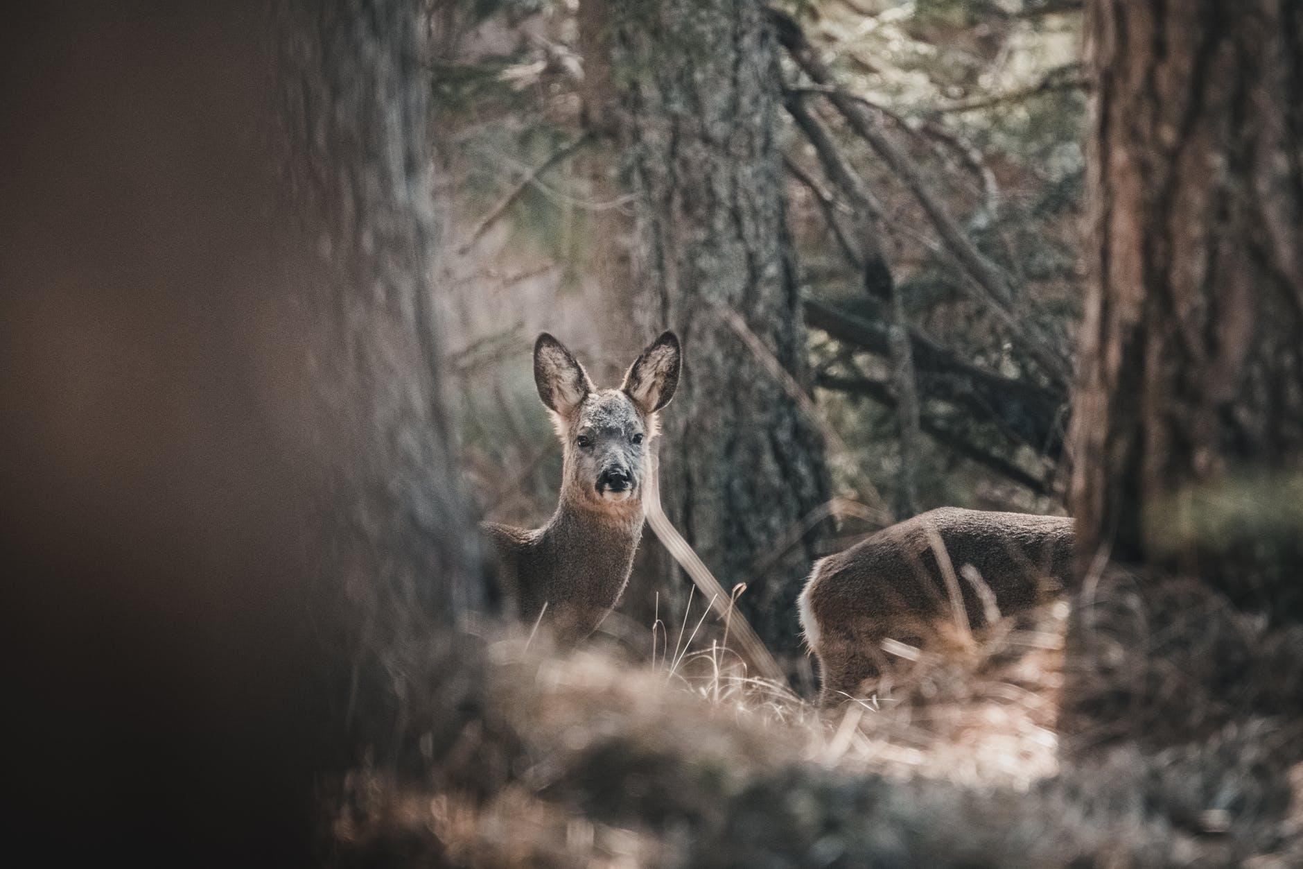 Få mere ud af din jagt med et vildtkamera