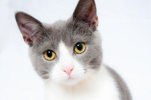 Kat i en kattebakke