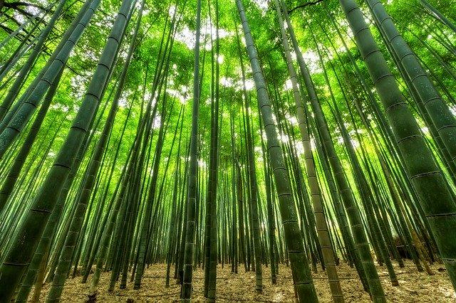 4 gode grunde til at vælge bambus som materiale til dit tøj